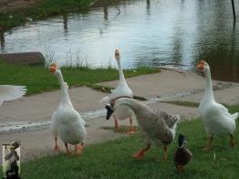 2007 Levelland, TX 11