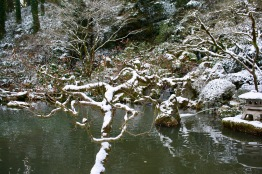 2019 02-07 Japanese Gardens 14