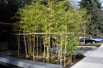 2019 02-07 Japanese Gardens 39
